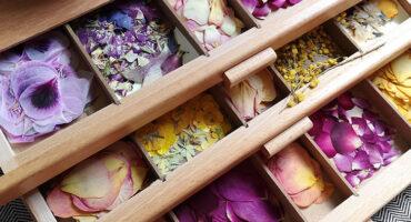 Conservation fleurs pressées