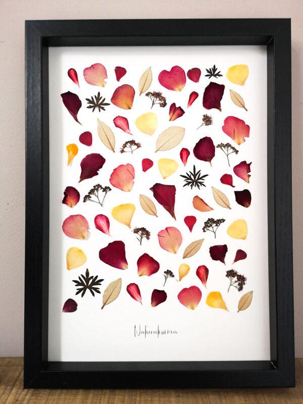 herbier 49
