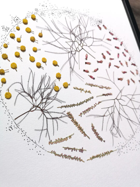 herbier lune graphique
